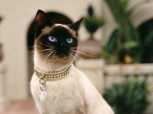 Для рабочего стола коты котята кошки
