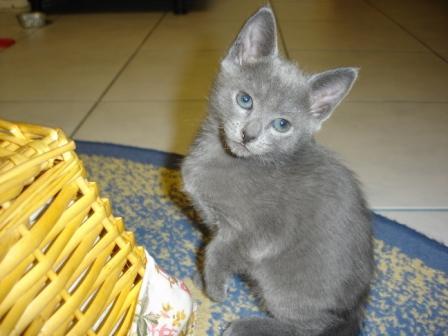 Кошки это домашние животные русские